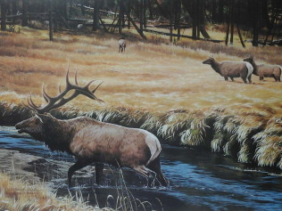 Gibbon River Elk - $150.00