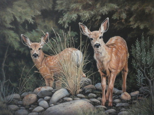 First Spring - Fawns - $125.00